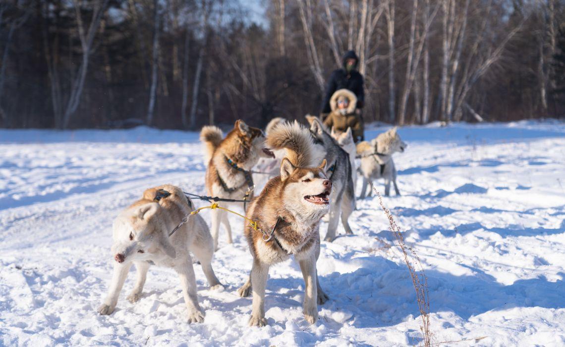 Hundeschlitten in Irkutsk